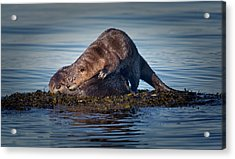 Acrylic Print featuring the photograph Wake Up by Randy Hall