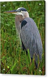 Wakodahatchee Wetlands Bird Acrylic Print by Juergen Roth