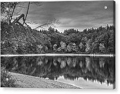 Walden Pond Fall Foliage Concord Ma Black And White Acrylic Print