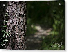 Walk In The Woods Acrylic Print by Andrea Silies