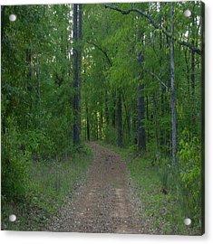 Walk In The Woods Acrylic Print by Carla Fionnagain
