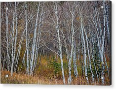 Acrylic Print featuring the photograph Walk In The Woods by James BO Insogna