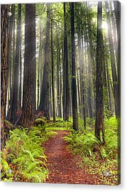 Walk In The Woods Acrylic Print by Leland D Howard