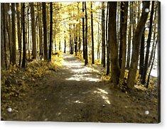 Walk In The Woods Acrylic Print