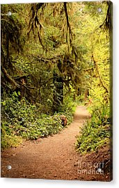 Walk Into The Forest Acrylic Print by Carol Groenen