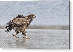 Walk Like An Eagle Acrylic Print