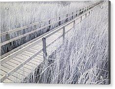 Walk Through The Marsh Acrylic Print