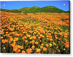 Walker Canyon Wildflowers Acrylic Print