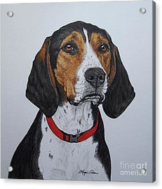 Walker Coonhound - Cooper Acrylic Print