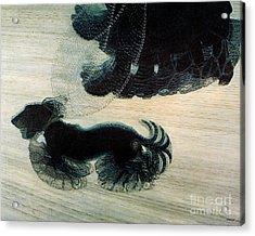 Walking Dog On Leash Acrylic Print