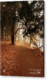 Walking In The Maine Woods Acrylic Print