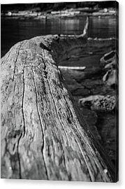 Walking On A Log Acrylic Print