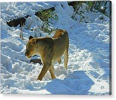 Walking On The Wild Side Acrylic Print