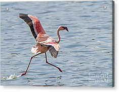 Walking On Water Acrylic Print by Pravine Chester