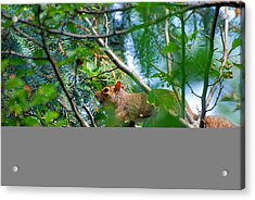 Walking The Branches Acrylic Print by Peter  McIntosh