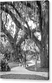 Walking The Dogs In New Orleans - Paint Bw Acrylic Print by Steve Harrington