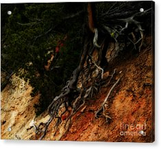 Walking Tree Acrylic Print