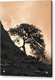 Walking Tree Acrylic Print by Ron Dubin