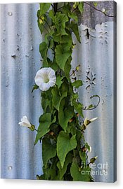 Wall Flower Acrylic Print