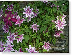 Acrylic Print featuring the photograph Wall Flowers by Chris Scroggins