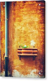 Acrylic Print featuring the photograph Wall Gutter Vase by Silvia Ganora