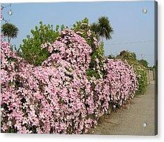 Wall Of Beauty In Ireland Acrylic Print by Jeanette Oberholtzer
