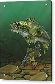 Walleye Acrylic Print