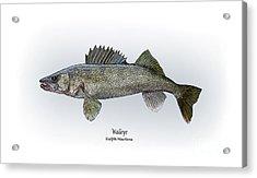 Walleye Acrylic Print by Ralph Martens