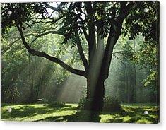 Walnut Tree And Swing Acrylic Print by Richard Danek