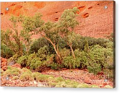 Acrylic Print featuring the photograph Walpa Gorge 03 by Werner Padarin