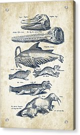 Walrus And Dolphins Historiae Naturalis 08 - 1657 - 43 Acrylic Print by Aged Pixel