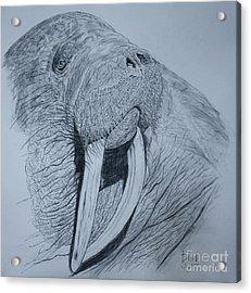 Walrus Acrylic Print by David Joyner