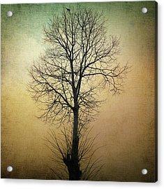 Waltz Of A Tree Acrylic Print