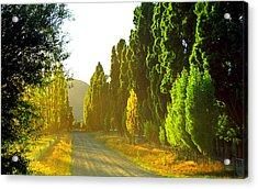 Wanaka Morning Light Acrylic Print by Kevin Smith