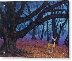 Wanderer Acrylic Print by James W Johnson