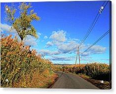 Wanderer's Way Acrylic Print