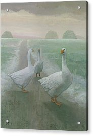 Wandering Geese Acrylic Print by Steve Mitchell