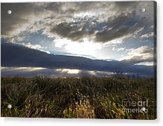 Acrylic Print featuring the photograph Wandering Heart by Everett Houser