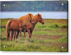 Wandering The Marsh Acrylic Print by Rick Berk
