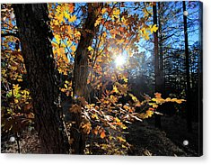 Acrylic Print featuring the photograph Waning Autumn by Gary Kaylor