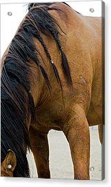 Acrylic Print featuring the photograph War Horse by Lorraine Devon Wilke