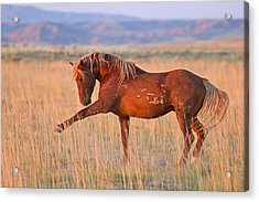 War Horse Acrylic Print by Sandy Sisti