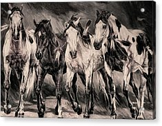 War Horses Acrylic Print by Dennis Baswell
