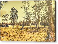 Waratah Tasmania Bush Landscape Acrylic Print