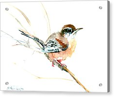 Warbler Songbird Art  Acrylic Print