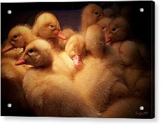 Warm And Fuzzy Acrylic Print by Robert Orinski
