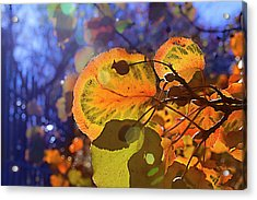 Warm Autumn Day Acrylic Print