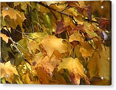 Acrylic Print featuring the photograph Warm Fall Leaves by Michael Flood