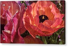Warm Flower Friends Acrylic Print by Jean Booth