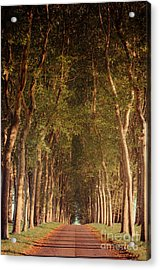 Warm French Tree Lined Country Lane Acrylic Print